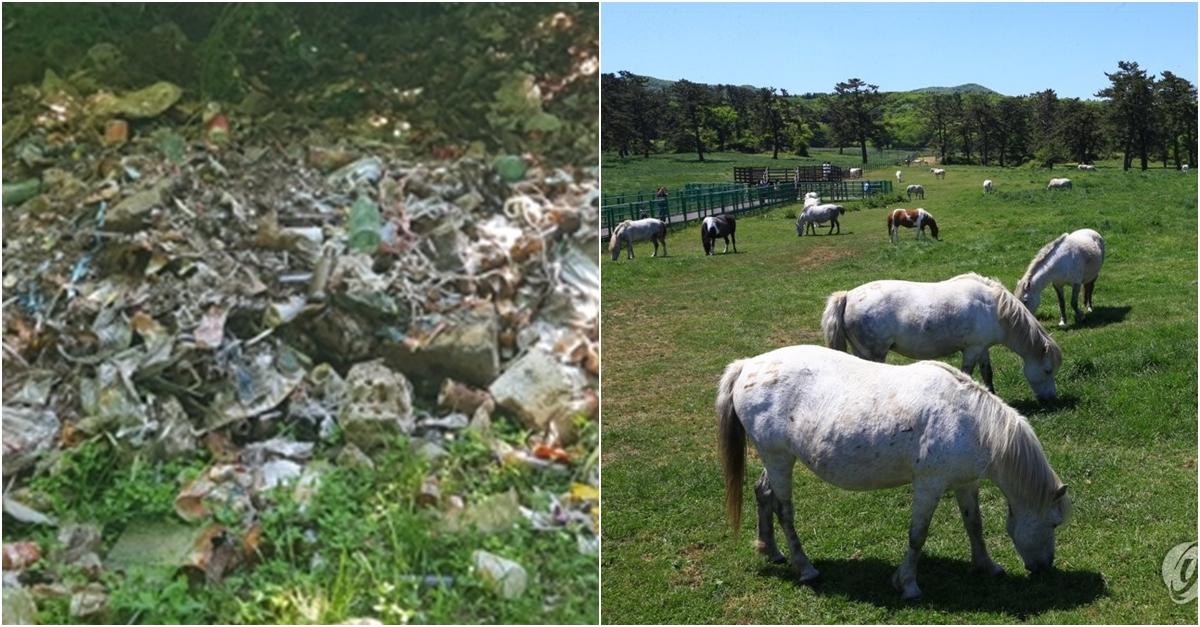 제주 한라산 성판악 부근서 30년 방치된 쓰레기더미 발견